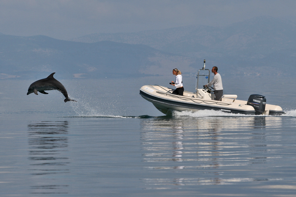 The Ionian Dolphin Project; a long story short